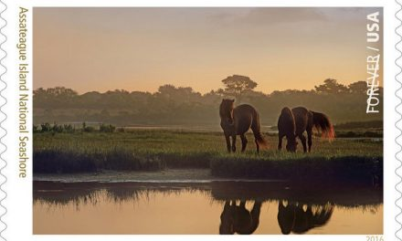Assateague Ponies star in new Forever Postage Stamp!