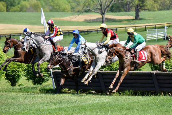 Irvin Naylor's Ebanour (green/yellow silks), trained by Cyril Murphy, won the Virginia Gold Cup Timber Stakes with Gustav Dahl in the irons.