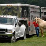 ELD Compliance for Livestock Hauler on Hold Indefinitely