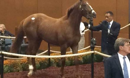 Maryland-bred Curlin Colt Tops Midatlantic Yearling Sale