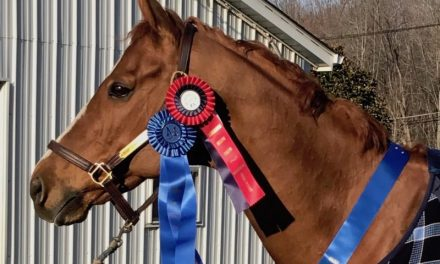 Beyond the Wire: retiring the Thoroughbred racehorse before its too late