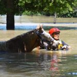 URGENT: Harvey, Horses & The AHC Survey