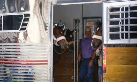 The Horses Have Arrived in DC!