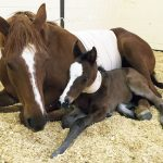 Critical Mare and Foal Care