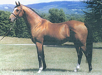 The Thoroughbred Reputed Testimony, Houston's sire, was bred by Bonita Farm in Darlington.