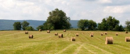 Hay Shortage in Maryland?