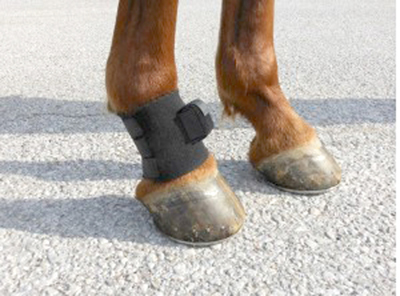 The Lameness Locator by Equinosis uses three points of contact (head, back, pastern) and a handheld computer system to identify lameness in horses.