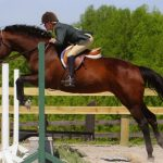 Howard County Horse Shows Honors Gretchen Mobberley