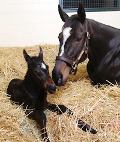 This spring, the first time in 30 years, foals were born on the Campus Farm.
