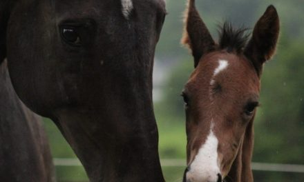 Jr Photographer Captures Dashing Foal