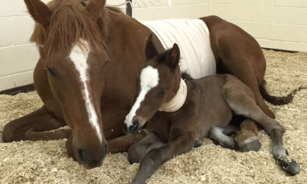 Specialized Hospital Care for Compromised Foal or High-Risk Mare – Marion duPont Scott Equine Medical Center