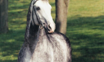 Hilltop Stallions Top USEF Breeding Lists