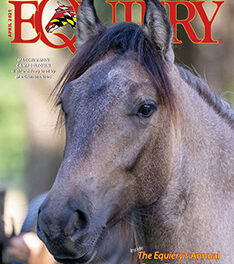 About This Month's Cover: Highland Ponies
