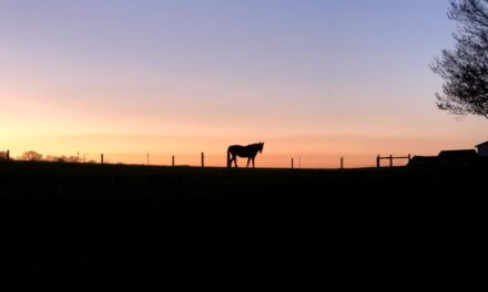 Horses and Preserving the Natural Environment